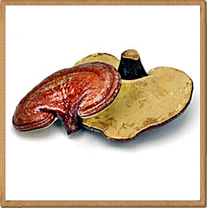 Reishi mushrooms (Ling zhi)