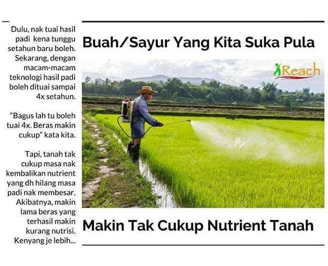 sayur beracun
