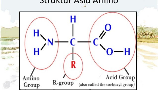 struktur-asid-amino
